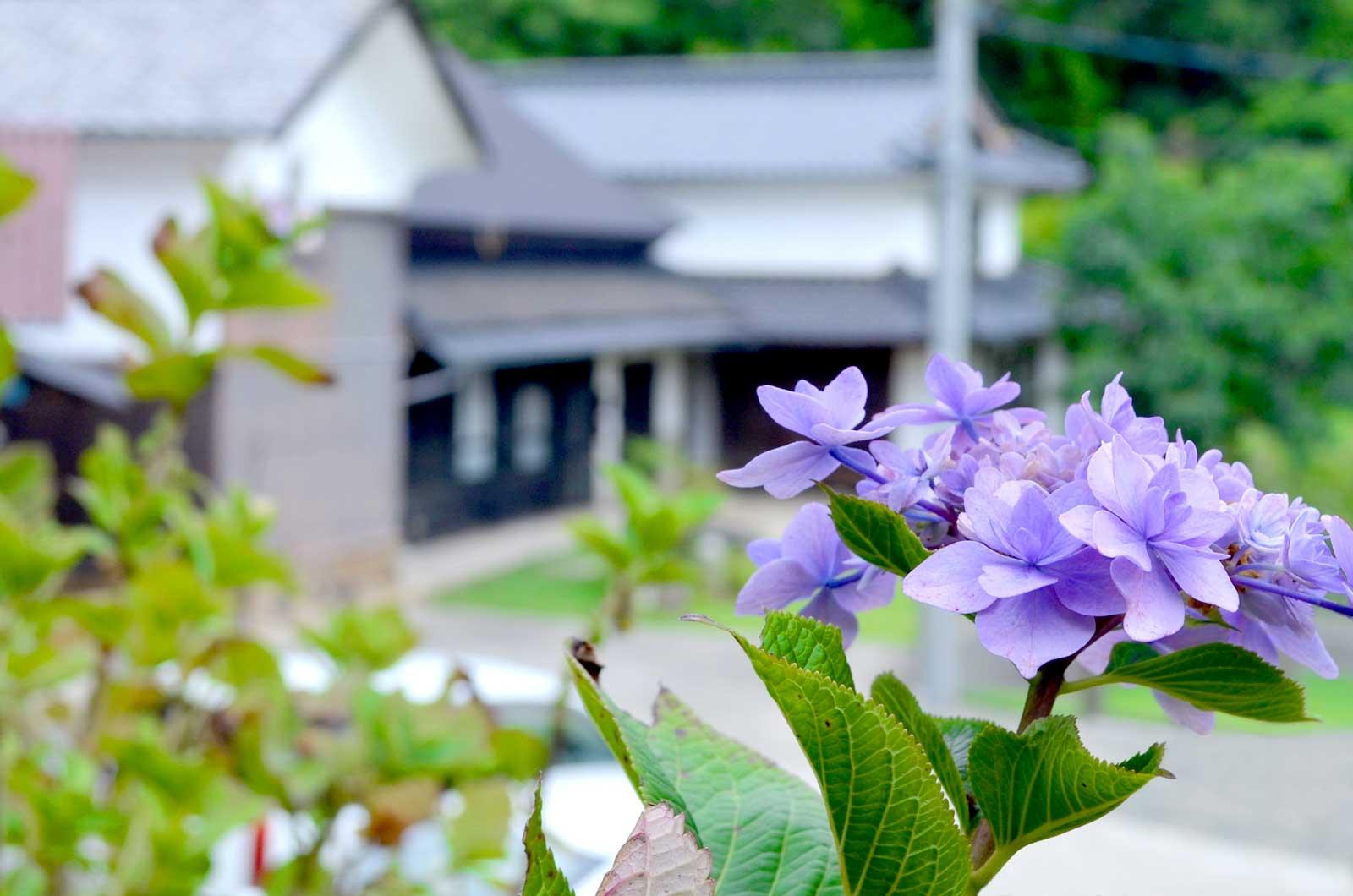 ドッグカフェヒュッゲの花
